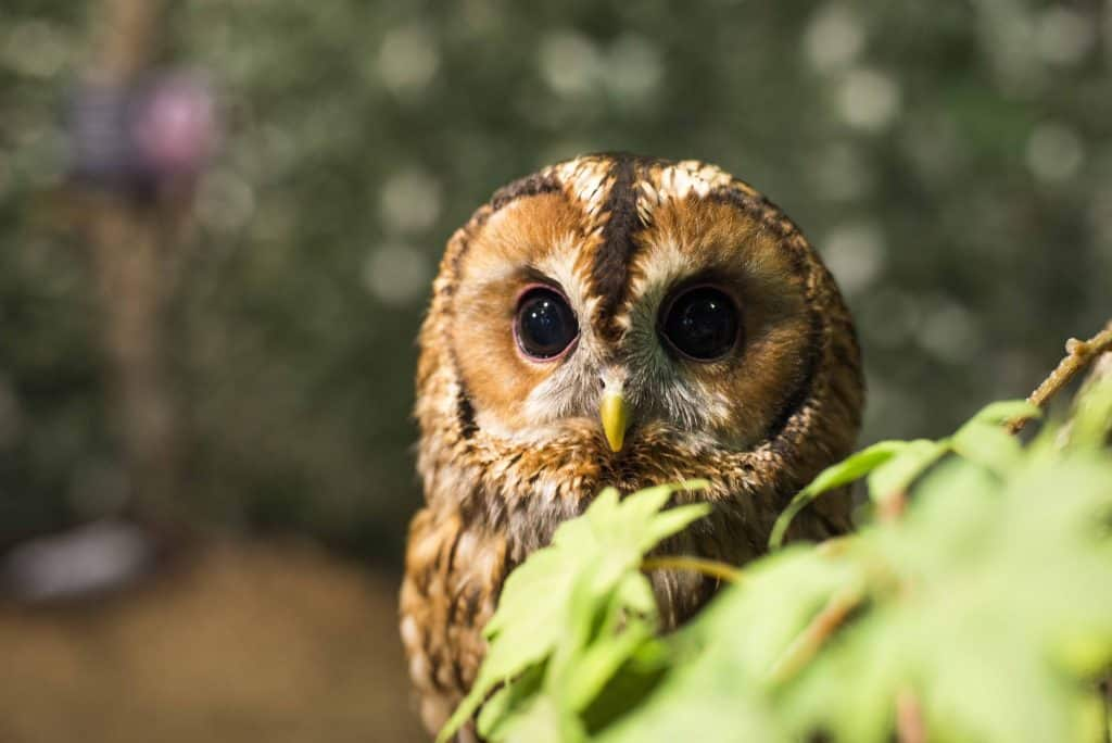 owl-food-forest-web