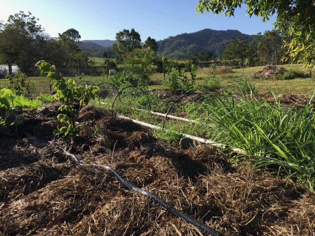 vegetable-garden-irrigation