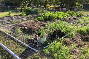 How to Start a Vegetable Garden from Scratch in Your Backyard [Step-by-Step Guide]