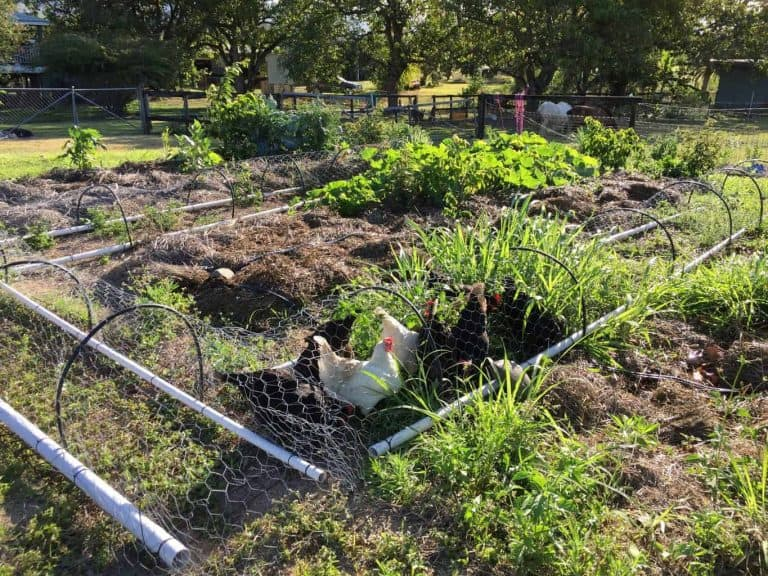 vegetable-gardening-for-beginners-feature