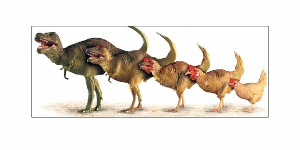T-Rex-to-chicken