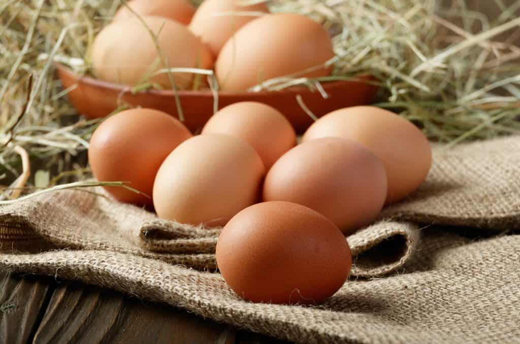 why-do-chickens-eat-their-own-eggs