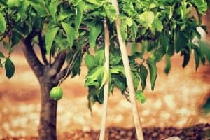 5 Simple Ways to Improve Your Soil Naturally