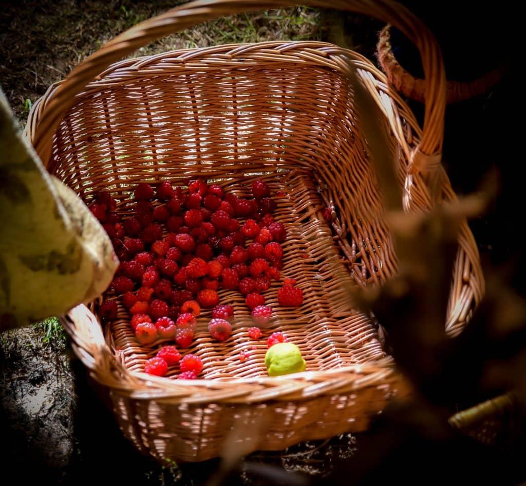 raspberry-basket-meditative-foraging