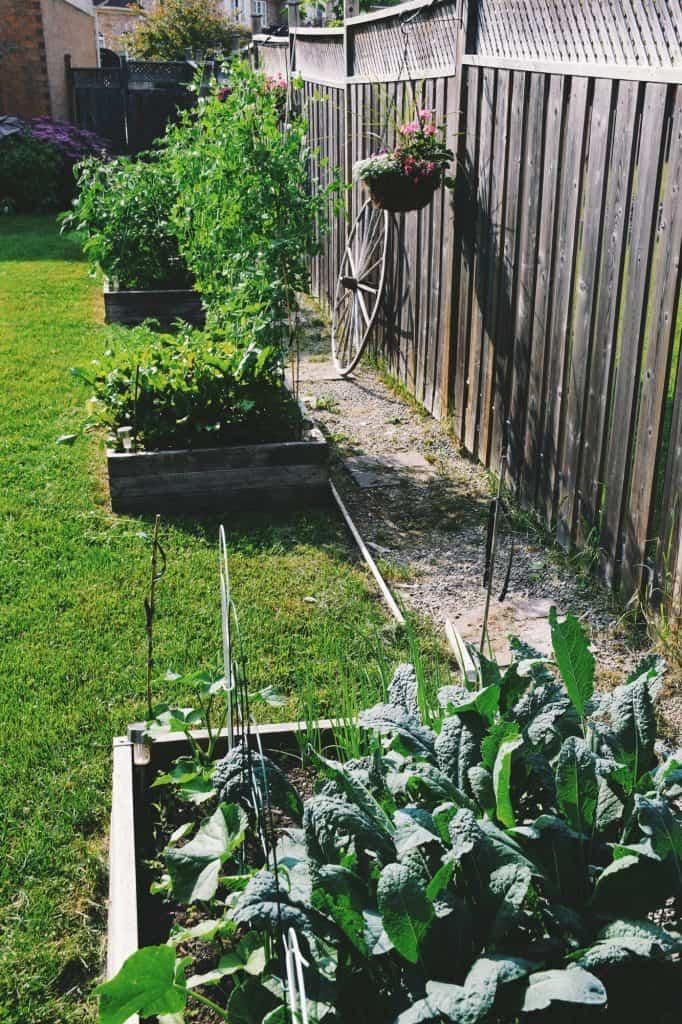 core-gardening-raised-garden-bed