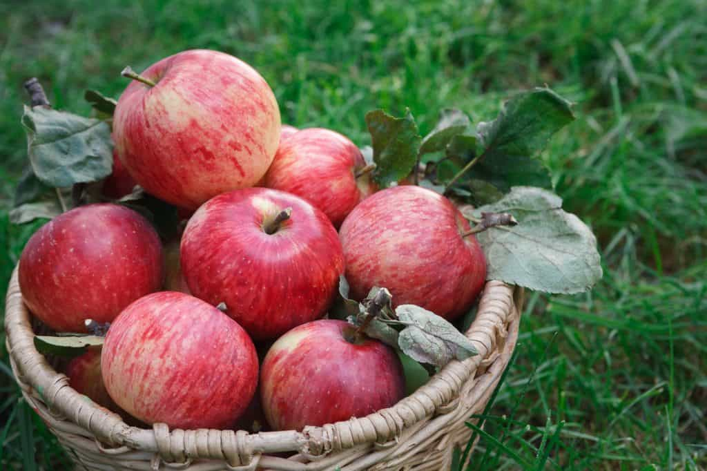healthy-food-permaculture
