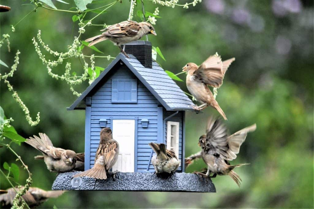 bird-feeder-attracting-chickens-to-my-yard