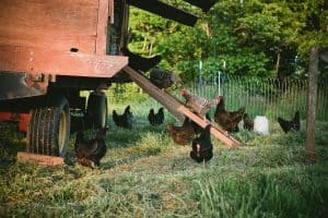 44+ DIY Chicken Coop Plans and Ideas You Can Build [and They're Free!]