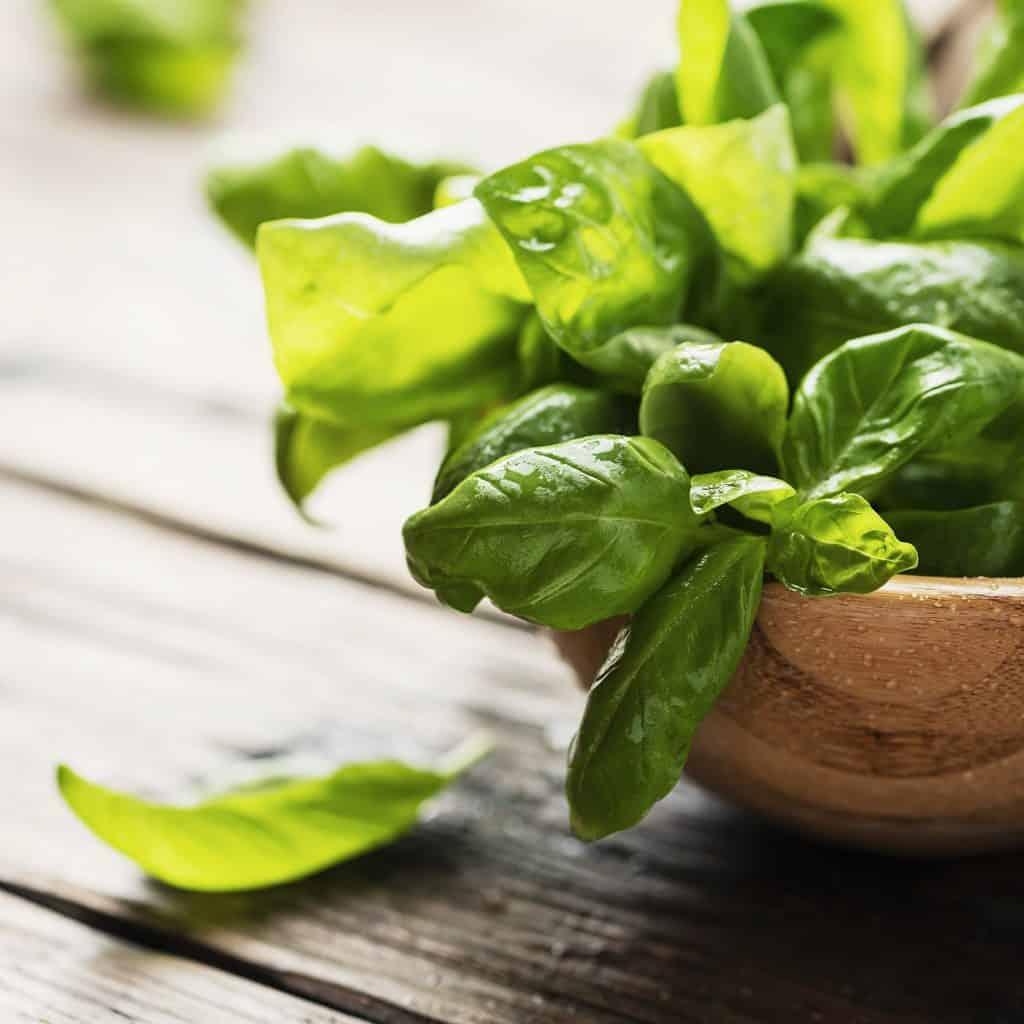 Green-fresh-basil-rosemary-substitute