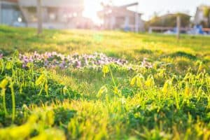 How to Get Rid of a Lawn Full of Weeds, Naturally [No Chemicals Required!]
