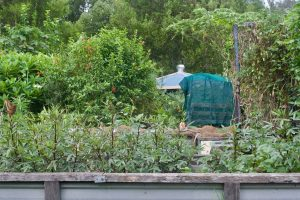 How to Live a Productive and Sustainable Permaculture Lifestyle