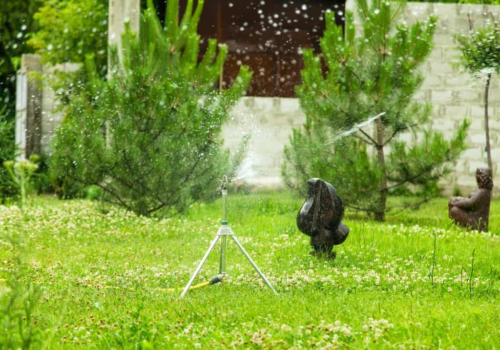 how-to-keep-chickens-out-of-my-yard-with-motion-sprinklers