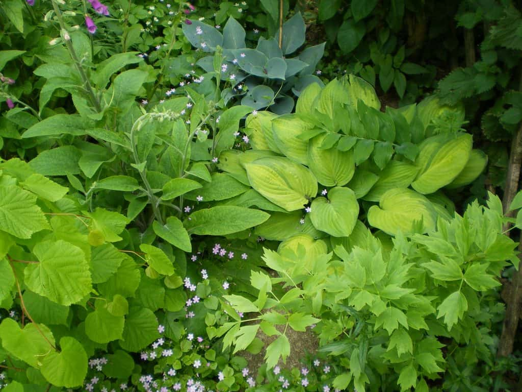 designing-ground-layer-of-permaculture-food-forest
