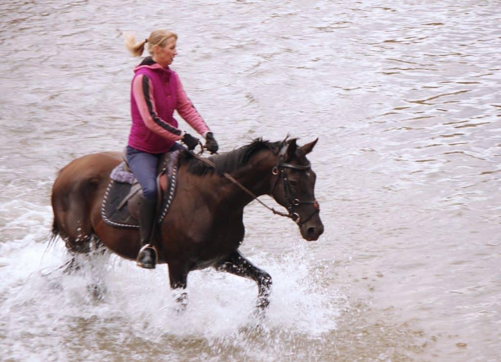 water-balking-horse