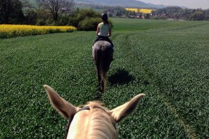 Why Do Horses Balk and What Can You Do To Stop It?
