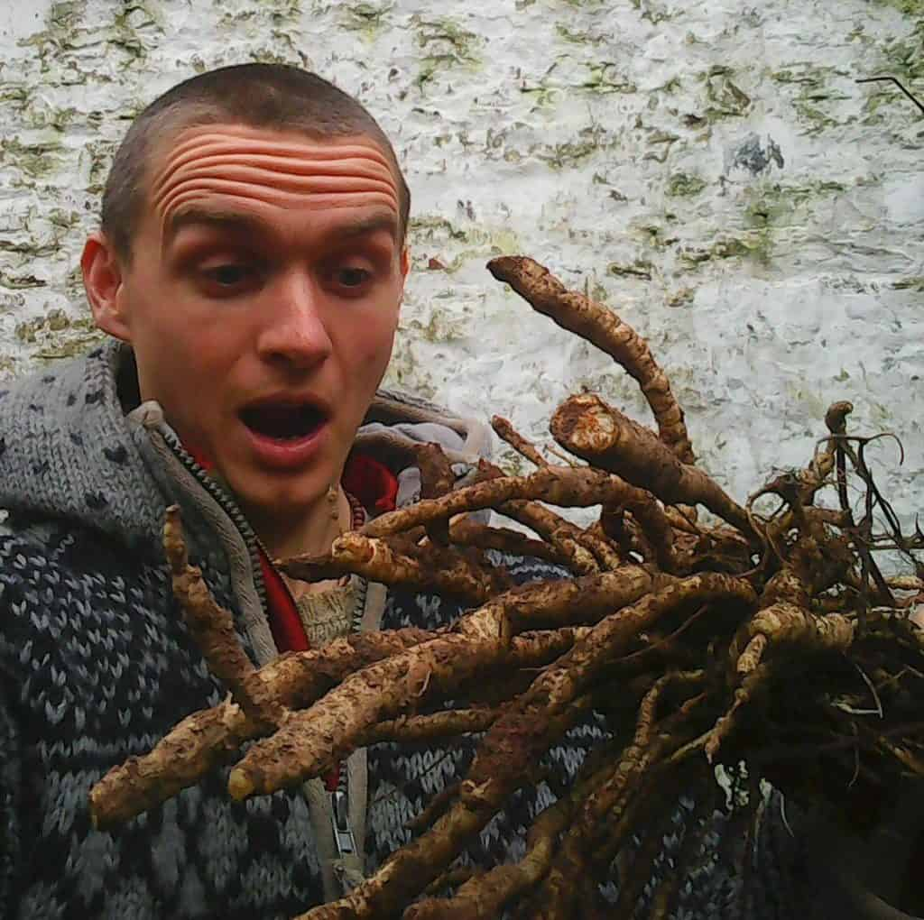 skirret-roots-food-forest