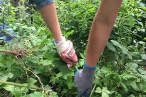 6 Best Ways to Remove Weeds From Large Areas + Homemade Weed Killer