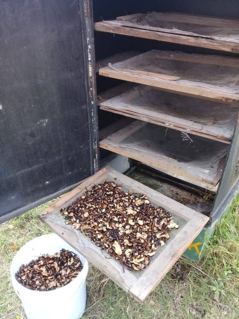 Comfrey-On-Drying-Racks