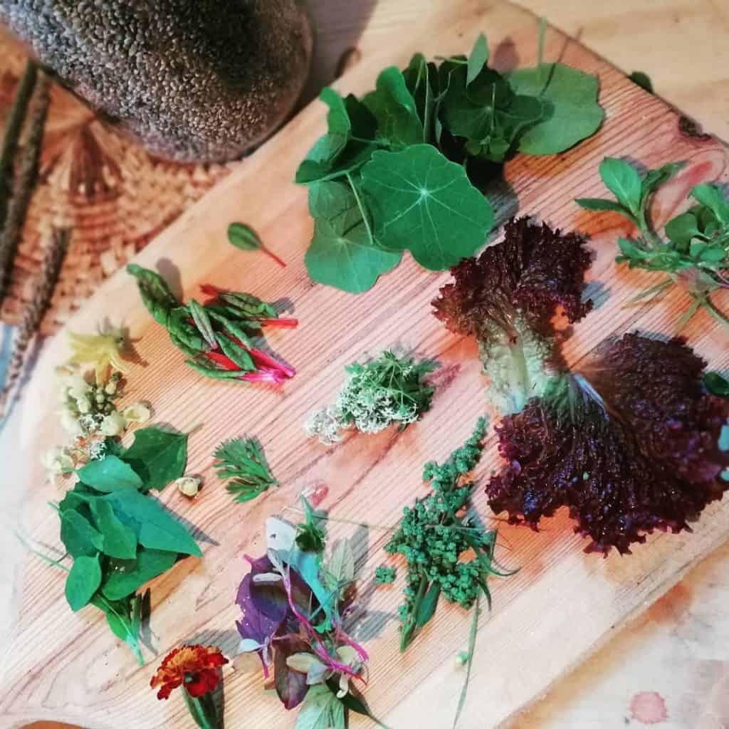 abundance-in-the-garden