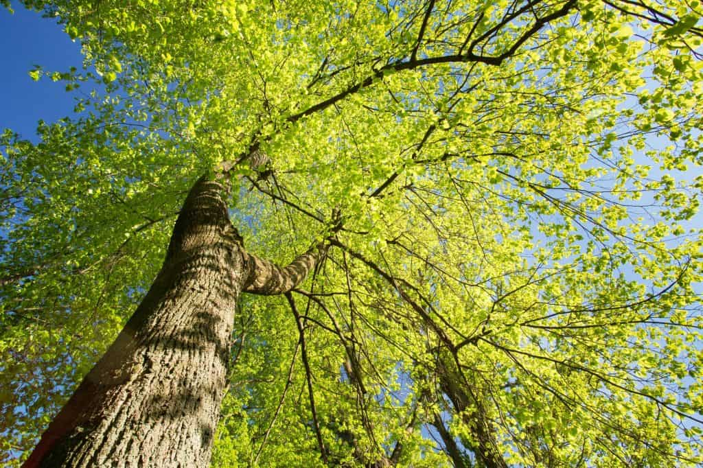 canopy-trees-food-forest-garden-layers