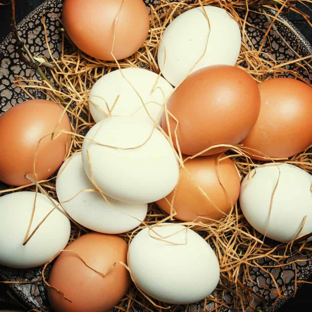 do-chickens-feel-pain-laying-eggs