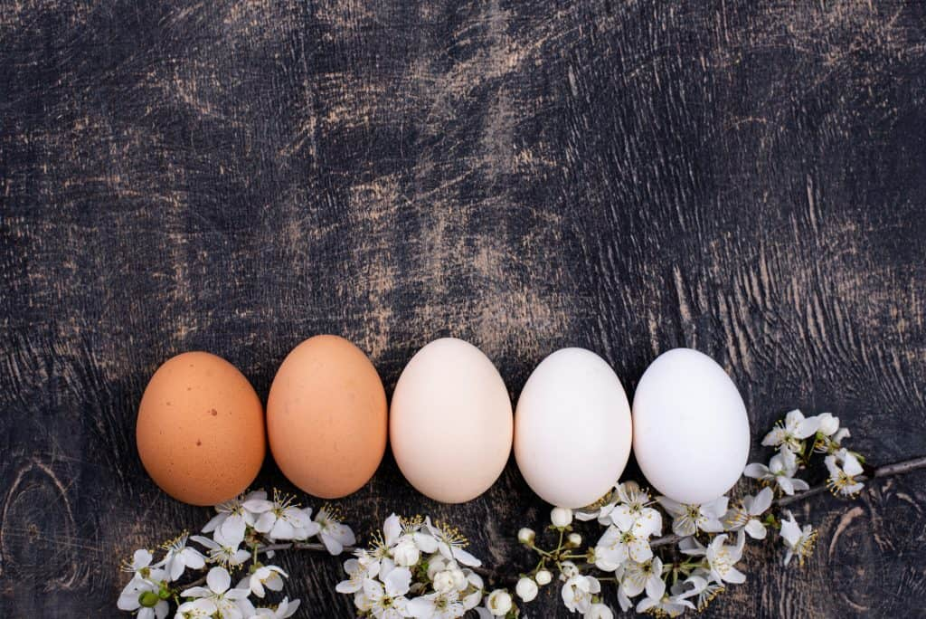 what-chickens-lay-white-eggs