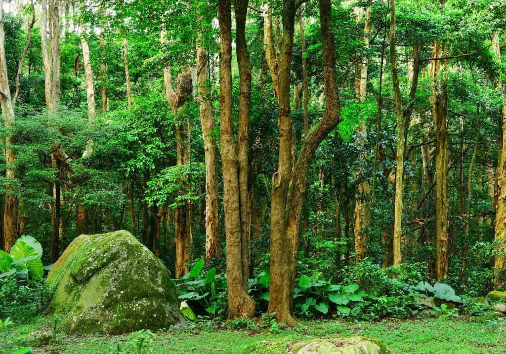 understory-canopy-trees-permaculture-food-forest