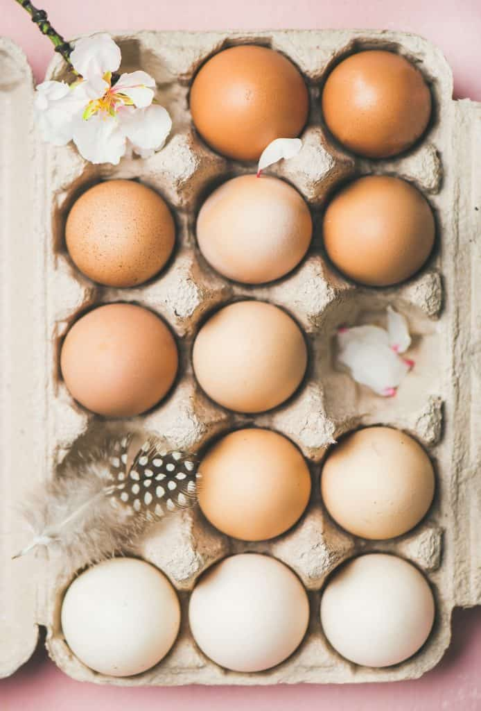 brown-vs-white-egg-laying-chickens