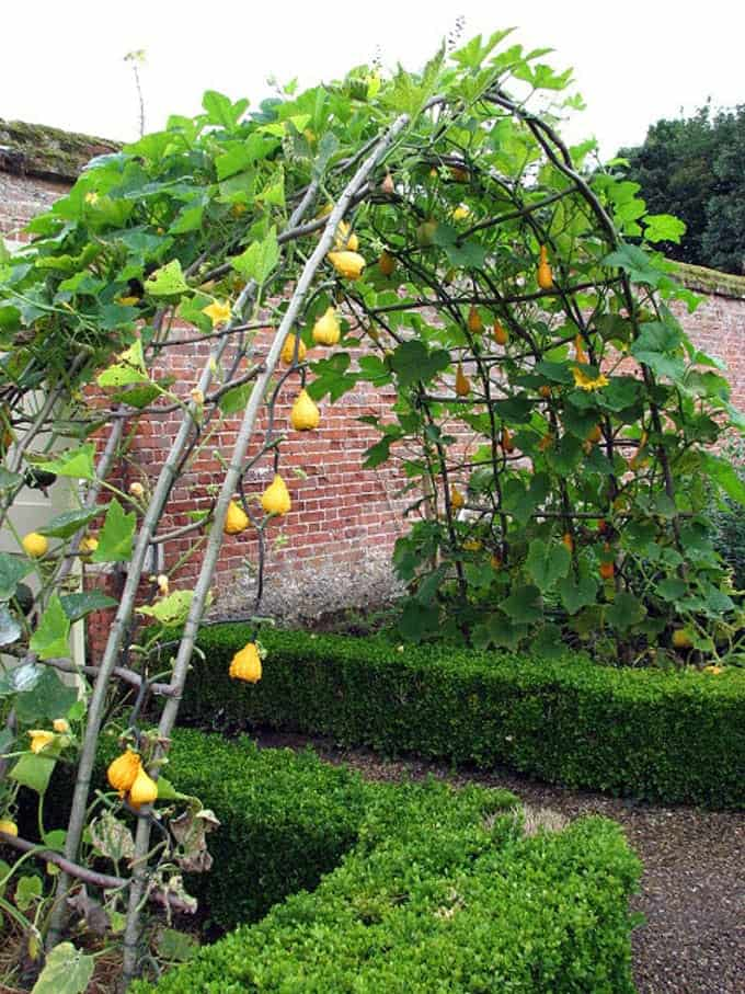 DIY-garden-trellis-ideas-build-watermelon-trellis-a-piece-of-rainbow
