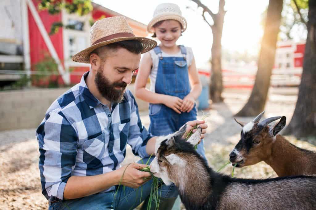 best-animals-small-farm-homestead