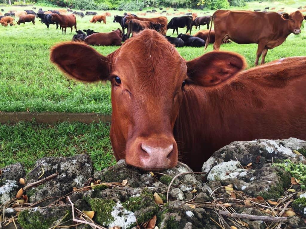 what-other-foods-do-cows-like-to-eat