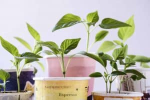 How to Take Natural, No-Fail Plant Cuttings Without Spending a Cent