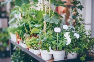 Tips to Get Your Herb Garden Growing Fast