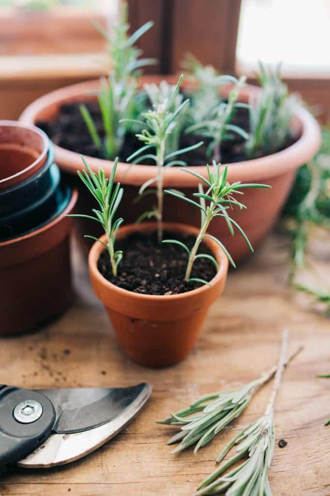 natural-organic-Plant-cuttings