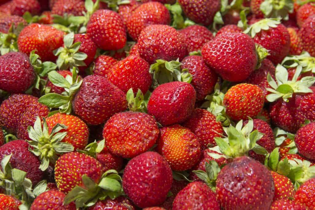 benefits-of-strawberries-for-chickens
