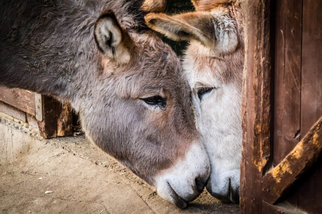 how-to-care-for-donkeys