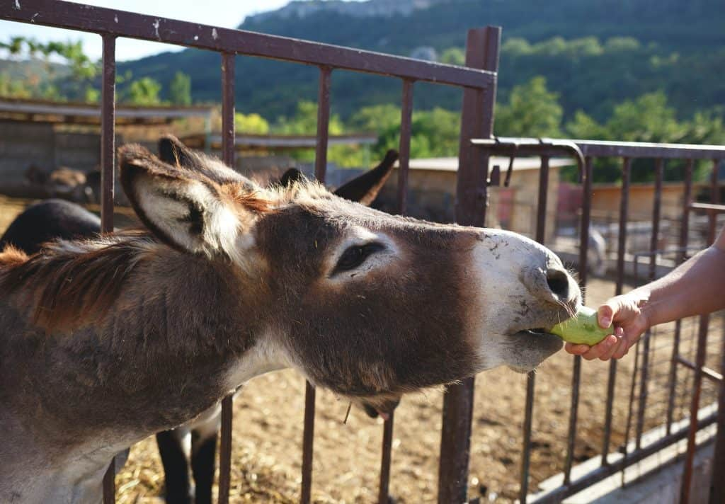what-to-feed-a-donkey