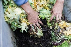 best-worm-farm-kit-composters