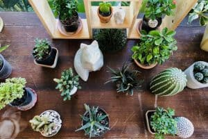when-how-to-repot-cactus