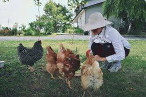Feeding Strawberries to Chickens... Hydrogen Cyanide, Anyone?