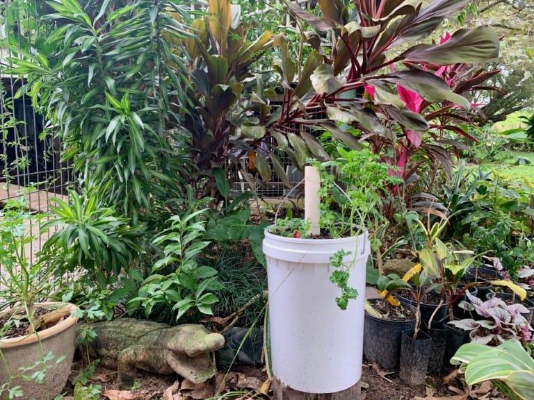 5-Gallon-Bucket-Garden