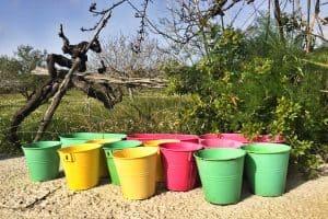 Bucket Gardening - 30+ Edible Plants to Grow in 5-Gallon Buckets