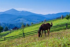 How to Prevent and Treat Plant Poisoning in Horses