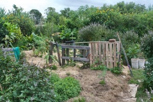 Food Forest Introduction - The Seven Layers of the Forest Garden