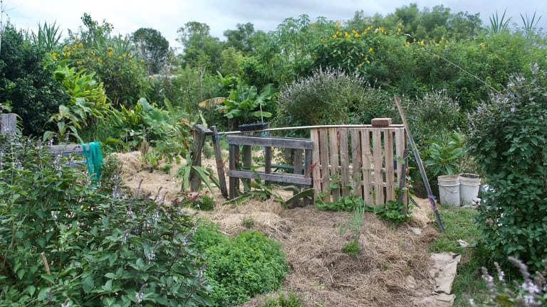 perfect-permaculture-allotment
