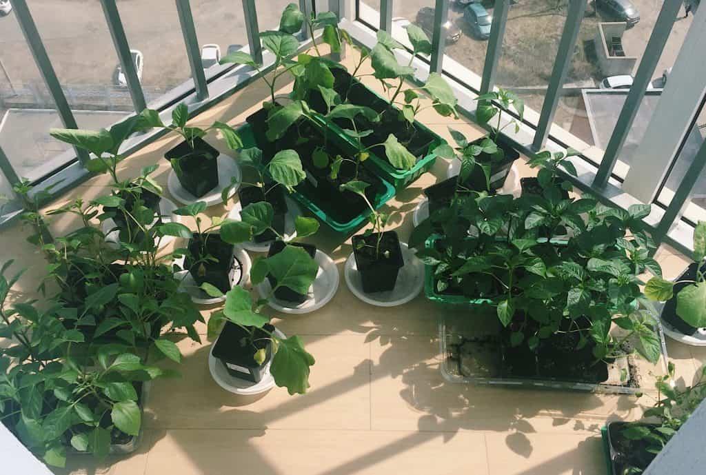 best-vegetables-to-grow-in-buckets