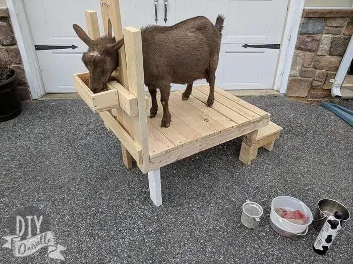 03 Goat Milking Stand - DIYDanielle