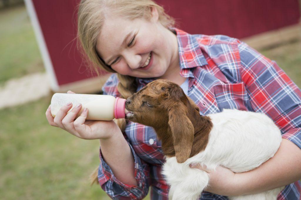 weaning-bottle-fed-goat