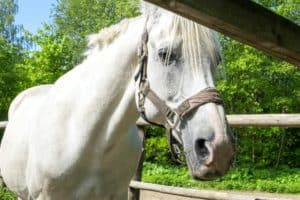 Understanding Why Your Horse Can't Vomit Could Save His Life