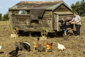 How Long Do Farm Fresh Eggs Last and How to Store Your Egg Bounty
